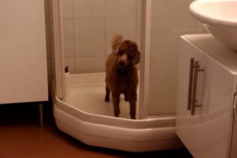 Noen gikk frivillig inn i dusjen for en kjapp vask