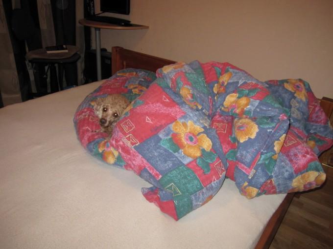 Rumpesyk puddel har valg soveplass først
