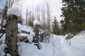 Snøhatter på gjerdet