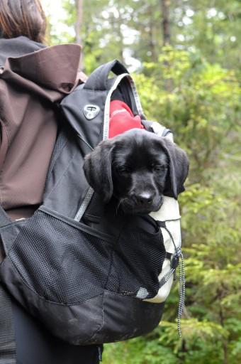Dette som menes med backpacking?